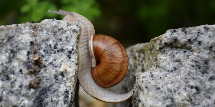 snail-1447233_1920.jpg